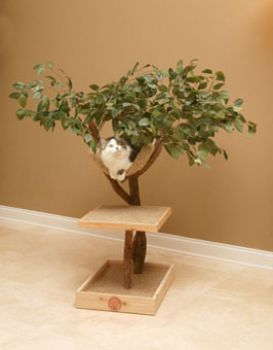 Seeding Cat Tree House