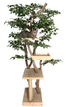 Sycamore Cat Tree House